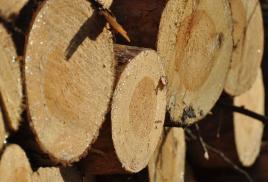 PDD zaprasza do współpracy tartaki i zakłady produkujące drewno konstrukcyjne